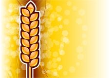 Gold corn Royalty Free Stock Photo