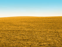 Gold corn field Stock Images
