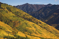 Gold country. Hillside of golden aspen trees above ironton colorado in the heart of the historic mining district Stock Images