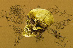 Gold cranium. Digital art for background and texture stock photo