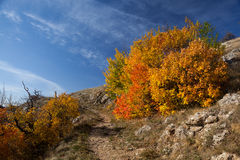 Gold Crimea. Stock Image