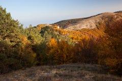 Gold Crimea. Royalty Free Stock Photos