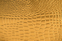 Gold Crocodile Skin Texture Stock Photos