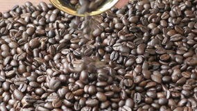 Gold cup brazilian coffee beans stock footage