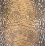 Gold/Dark Brown Embossed Gator Belly Leather Texture Stock Images