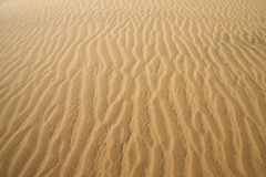 Gold desert. Sand texture. Royalty Free Stock Photo