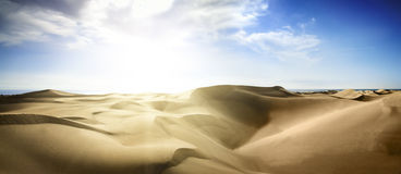 Gold desert into the sunset. Stock Images
