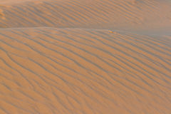 Gold desert into the sunset. Sand texture. Gold desert into the sunset. Sand background texture Royalty Free Stock Photos