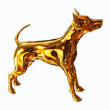 Gold Dog Royalty Free Stock Photography