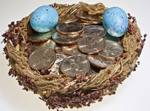 Gold dollar coins in bird's nest with eggs Stock Photos