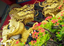 Gold dragon sculpture and Red flower of Christ Thorn in Chinese royalty free stock image
