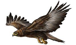 Gold eagle fly color vector. Stock Photos
