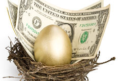 Gold egg. And money in a real nest stock image