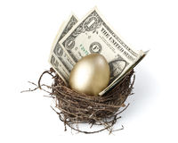 Gold egg. And money in a real nest royalty free stock photography