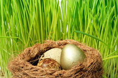 Gold egg Stock Image