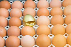 Gold egg with gold coin Royalty Free Stock Images