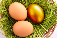 Gold  egg in nest Stock Images