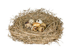 Gold egg in nest Stock Photos