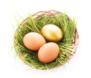 Gold  egg in nest isolated Royalty Free Stock Photography
