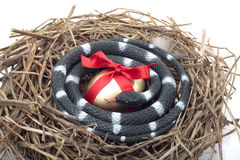 Gold egg in nest with snake protecting it Royalty Free Stock Image