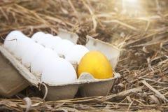 Gold egg with white egg. Business idea, golden egg in white dozen egg Stock Images