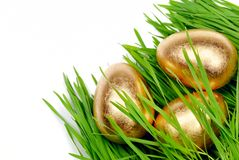 Gold eggs hide in wheat plant Stock Image