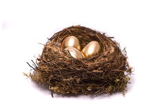 Gold eggs in a nest Royalty Free Stock Image