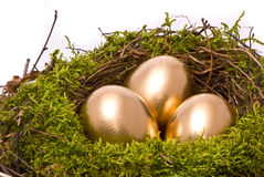 Gold eggs in a nest Stock Images