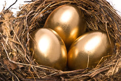 Gold eggs in a nest Royalty Free Stock Photography
