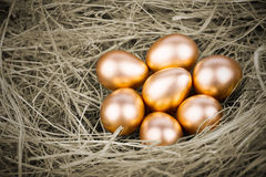 Gold Eggs Royalty Free Stock Photos