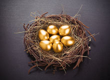 Gold eggs Stock Image