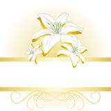 Gold elegant banner background with lilium flowers. White & gold background with lilium flowers Royalty Free Stock Image