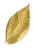 Gold Elm Leaf. Isolated metallic gold elm leaf Royalty Free Stock Photo