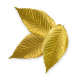 Gold Elm Leaf Stock Image