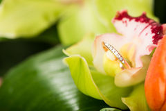 Gold engagement ring in flower Royalty Free Stock Images