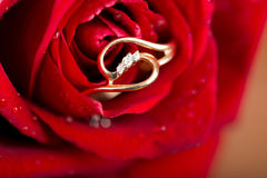 Gold  engagement ring in rose flower Royalty Free Stock Photography