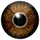 Gold eye Stock Image