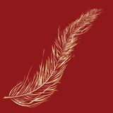 Gold feather Royalty Free Stock Images