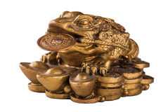 Gold feng-shui frog Stock Images
