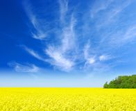 Gold field. Landscape of the gold field Stock Photos