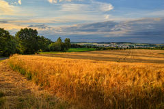 Gold-field. Fields of grain over the valley with the city Royalty Free Stock Images