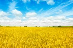 Free Gold Fields Wheat Panorama With Blue Sky And Clouds, Rural Countryside Stock Photo - 120341100