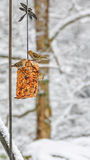 Gold finch winter scene Stock Images