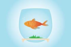 Gold fish. Goldfish in aquarium, on blue and gentle background ( and illustration stock illustration