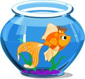 Gold fish. In aquarium on white background stock illustration