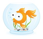 Gold Fish. A cute gold fish swimming in aquarium vector illustration