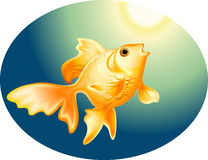 Gold fish. Deep in the sea Stock Images