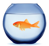 Gold fish. Swimming in the water in fishbowl. Vector EPS-10 Royalty Free Stock Photos