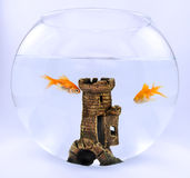 Gold fish. Two gold fish in aquarium with castle Stock Photo