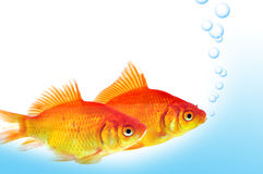 Gold fish. Released bubbles on water Stock Photo